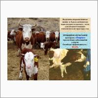Алтайский НИИ животноводства и ветеринарии