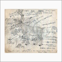 Названия частей тела оленя на орокском языке (из архива К.А. Новиковой)