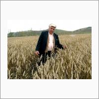 Деморенко И.Ф. – автор сортов мягкой яровой пшеницы Саянская 55, Кантегирская 89, Безим (2004 г.)