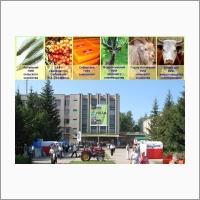 НИИ «Федерального Алтайского научного центра агробиотехнологий»