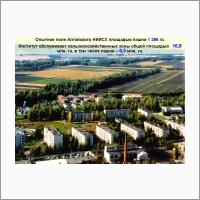 Опытное поле  Алтайского НИИ сельского хозяйства