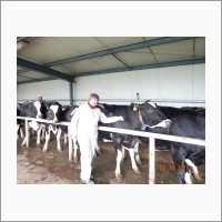 Оздоровления крупного рогатого скота от бруцеллеза на молочных комплексах