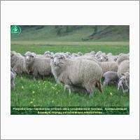 Горно-Алтайский НИИ сельского хозяйства