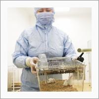 SPF-виварий располагает десятками генетических линий лабораторных животных, включая созданные силами сотрудников ФИЦ ИЦИГ СО РАН