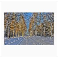 Березовая аллея зимой, Академгородок, 2018. Фото С.В. Алексеенко.