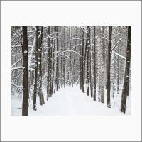 Ботсад зимой. Фото С.В. Алексеенко.