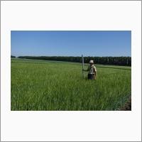 SibNIIRS people examining experimental barley plots