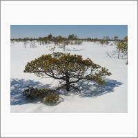 Бакчарское болото зимой. Фото Головацкой Е.А.