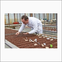 "Research in the shared-access center ""Laboratory of Artificial Plant Growth"" goes on no matter which season is outside"