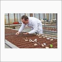 Научно-исследовательская работа в теплицах ЦКП «Лаборатория искусственного выращивания растений» ведется на протяжении всего года.