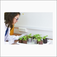 Сотрудники ФИЦ ИЦИГ СО РАН освоили технологию создания трансгенных растений для решения различных научно-исследовательских задач