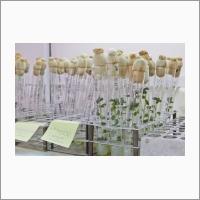 ФИЦ ИЦИГ СО РАН является ведущей научной организацией в реализации национальной программы развития отечественного картофелеводства и в настоящее время в его стенах идет интенсивная работа по селекции новых сортов картофеля для нужд российского агропрома
