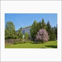 Сад Победы, заложен возле главного корпуса ФИЦ ИЦИЦГ СО РАН 9 мая 2015 г.