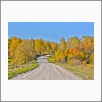 Лесная дорога у р. Коен. Фото С.В. Алексеенко.