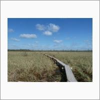 Осоково-сфагновая топь – Бакчарское болото, Бакчарский район, Томская область