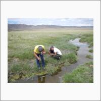 Сбор гидробионтов на ручье Булак (бассейн озера Шара-Нур)