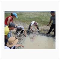 Сбор гидробионтов с временно образовавшегося водоема