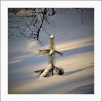 Солнечный зимний день. Фото С.В. Алексеенко.
