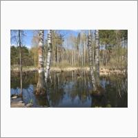 Утиное озеро в Академгородке. Фото С.В. Алексеенко.