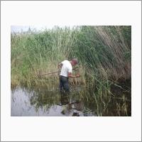 Взятие пробы. Пресноводный пойменный водоём озера Шара-Нур