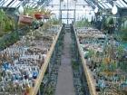 Оранжерея Центрального сибирского ботанического сада СО РАН
