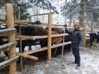 Буян Монгуш исследует тувинскую породу лошадей