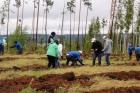 Посадка леса в Иркутской области, 2017 г.