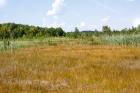 Кокуйское болото в Кемеровской области.  Фото предоставлено Юрием Манаковым