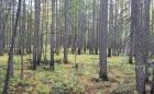 Лиственничный лес в Центральной Якутии. Фото П. Я. Константинова, ИМЗ СО РАН