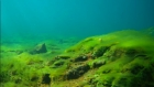 Подледное развитие водорослей в п. Листвянка на Байкале. Видео ЛИН СО РАН