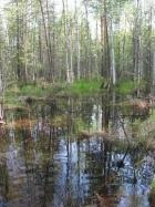 Заболоченный лес в Томской области. Фото ИМКЭС СО РАН